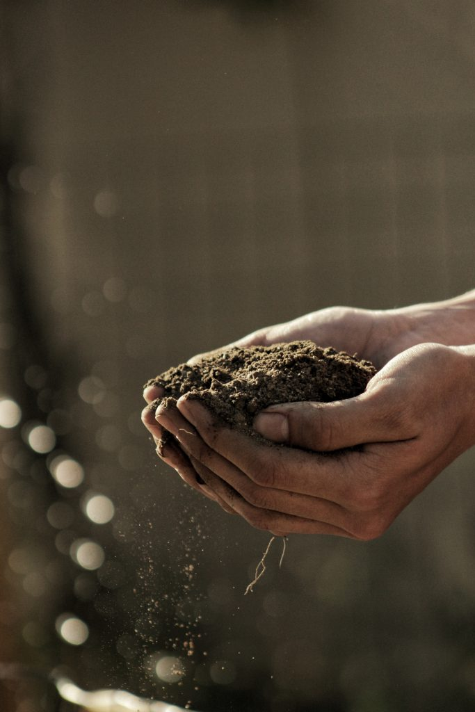 Cupped hands hold a handful of soil